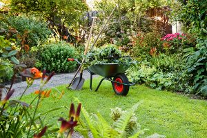 Bahçe Bakımı ve Peyzaj